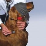 Hund mit Augenbinde, CalmingCap