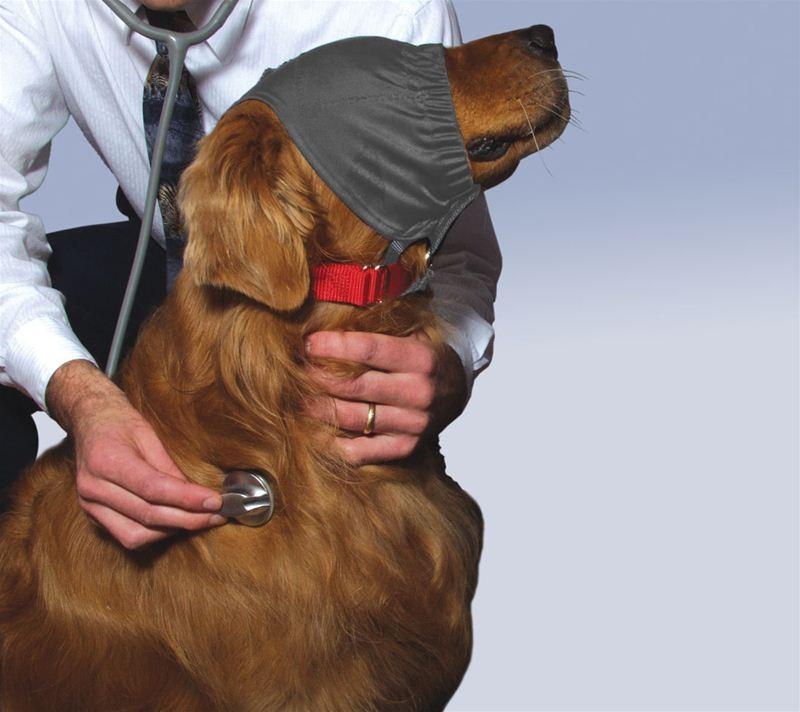 hunden milch geben
