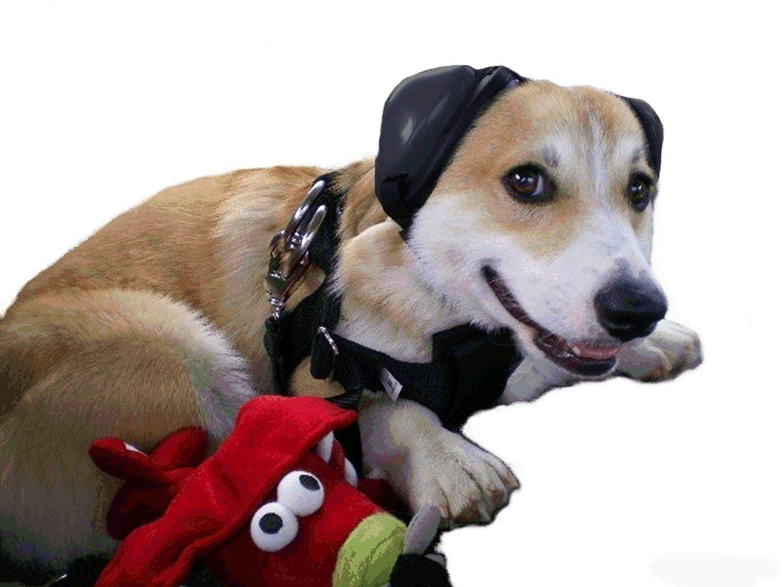 angst globuli hund