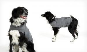 Hundeberuhigungsshirt AKC Calm Coat, angezogen
