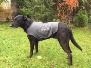 Lucky mit Hundeberuhigungsweste Thundershirt