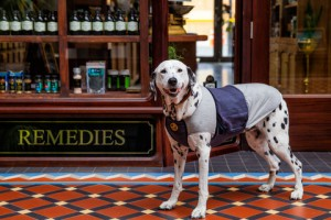 Hundeberuhigungsmantel - Canine Calm Coat