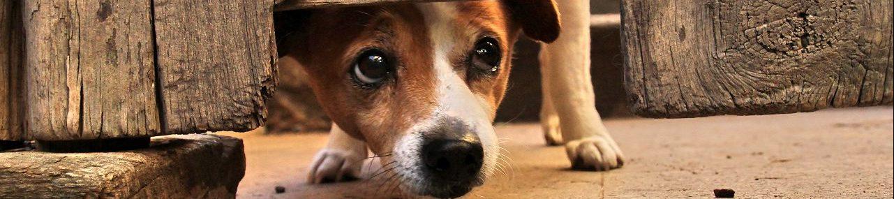 Beruhigungsmittel für Hunde
